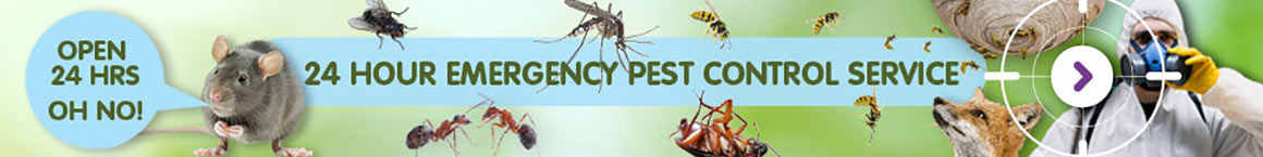 24hr Emergency Pest Control London