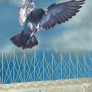 How to keep birds away from your House or Business using Bird Wire, Bird Nets & Spikes in Ealing W5 & throughout West London