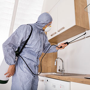 Our 24 hour Pest Control & House Cleaning Services are also available for commercial business premises in Chelsea 24/7.