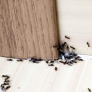 Insect Proofing Services in White City W12