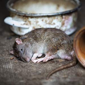 Dead Animal Removal & Carcass Disposal for Houses & Commercial Properties in South West London
