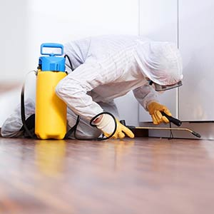 On Time Pest Control guarantees a thorough and deep clean of your property in St Margarets TW1 to eliminate harmful bacteria and other pest waste remains.
