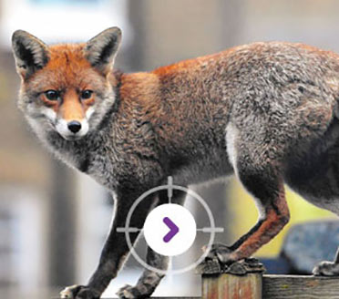 PEST CONTROL FOX TRAPPING & DISPOSAL