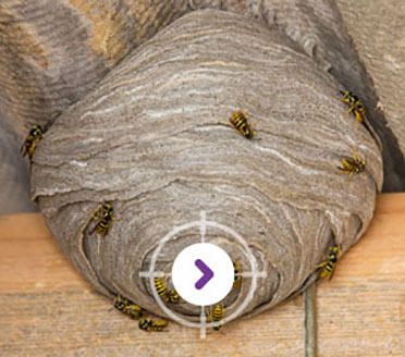 PEST CONTROL NEST REMOVALS