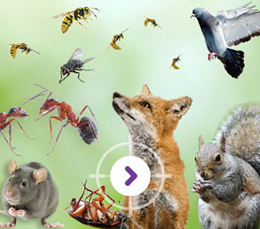 PEST CONTROL PEST PROOFING SERVICE