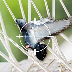 24 Hour Pigeon Control & other Bird Deterrents for Homes & Businesses across West London