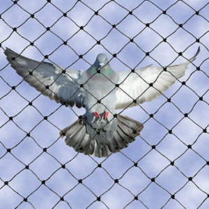 Our Bird Netting techniques provide the ultimate solution to keep the bird pests away and are known to be one of the cheapest bird control methods available in the UK.