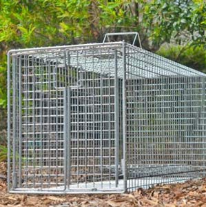 Wire Mesh Live Traps for Foxes will be installed strategically according to the survey results.