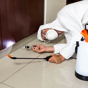 On Time Pest Control provides a range of sanitation services for properties throughout West London.