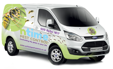 We offer specialised Pest Control services in and around West London, South West London, Kingston, Twickenham and Richmond